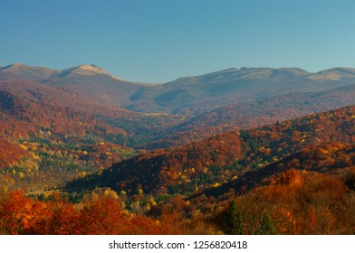 Autumn in the primeval forest. Bieszczady Mountains. Bukowe Berdo, Krzemien. Bieszczady National Park