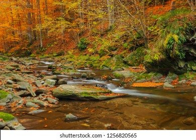 Autumn in the primeval forest. Bieszczady Mountains. Prowcza stream. Bieszczady National Park.