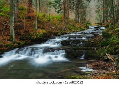 Autumn in the primeval forest. Bieszczady Mountains. Rzeka stream. Bieszczady National Park - Shutterstock ID 1256820622