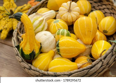 Autumn pumpkin background. Close up of mini pumpkins at farmers market