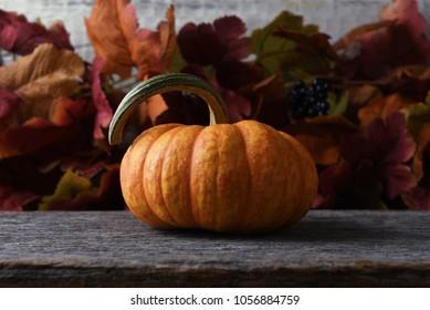 Autumn Pumpkin still life with Fall leaves