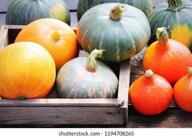 Autumn pumpkin Thanksgiving background concept . Orange and green pumpkins in wooden box on rustic table