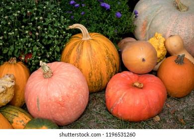 Autumn pumpking decoration