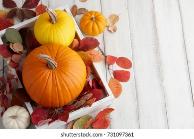 Autumn pumpkins and colorful leaves decorations for Halloween and Thanksgiving holidays