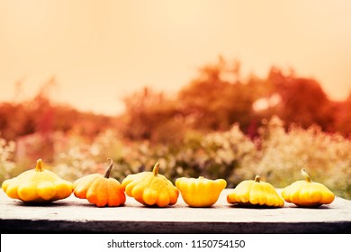 AUTUMN PUMPKINS HARVEST ON TABLE IN THE GARDEN/THANKSGIVING DAY BACKGROUND