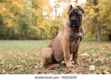 Autumn puppy portrait