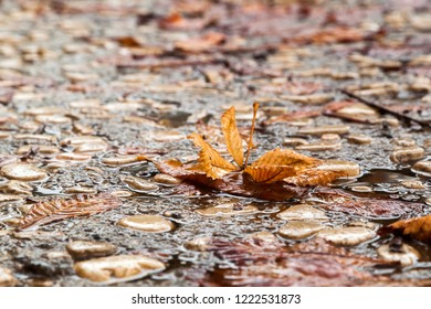 Autumn rain - close up of brown leaf