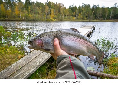 Autumn rainbow trout i anglers hand