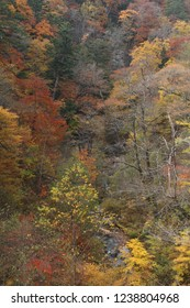 Autumn ravine and colored leaves