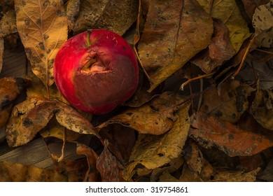 autumn red apple closeup of a little rotten