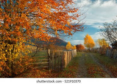 autumn, red beech and fence along the road, in the background birch and mountain