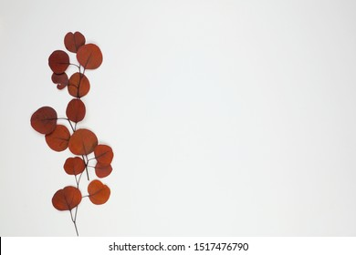 Autumn red brown eucalyptus leaf branch on a white background. Side border arrangement with copy space.