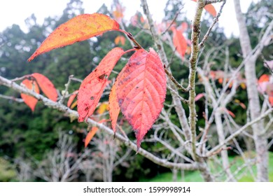 Autumn Red Brown Leaves Blossom