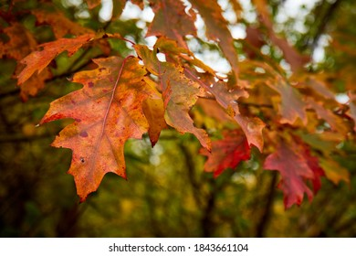 Autumn - red leaves on a twig