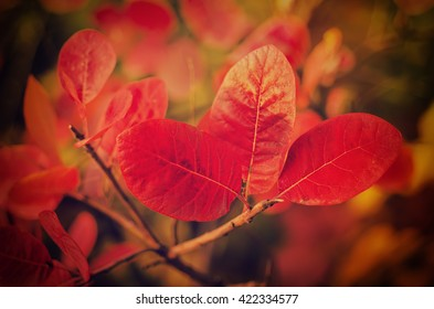 Autumn red tree branch with leaves, natural fall vivid hipster background