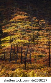 Autumn Regrowth After the Waldo Canyon Fire