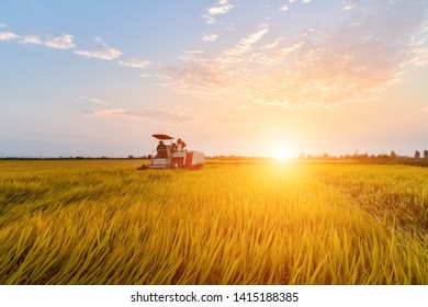 autumn rice paddy with combine harvester in sunset