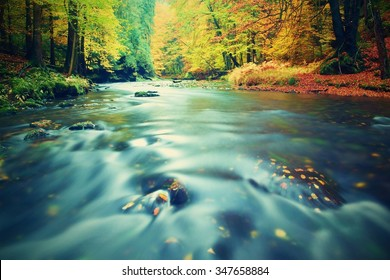 Autumn river bank with orange beech leaves. Fresh green leaves on branches above water make reflection. Rainy evening at stream.