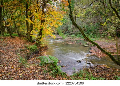Autumn at River Blyth in Plessey Woods, a Country Park in Northumberland, popular with walkers and sits on the north bank of the River Blyth