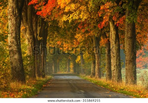 Autumn Road Alley Northern Poland./ Autumn Road Alley.