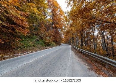 Autumn road . beautiful bright autumn road landscape. red leaves on the trees.