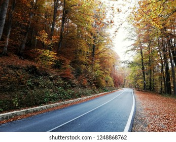 Autumn Road in Bulgaria