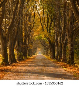 Autumn road country scene in north Poland