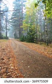 Autumn road in forest in Poland