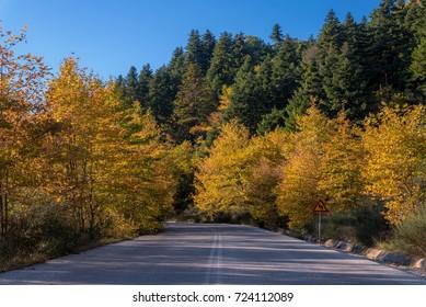 Autumn road in Greece