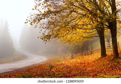 Autumn road. Autumn landscape. Fall nature. Colorful foliage on trees and ground. Road in mist.