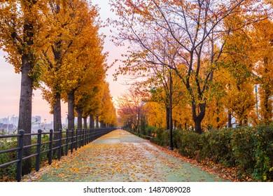 Autumn road in the Park,Seoul Korea.