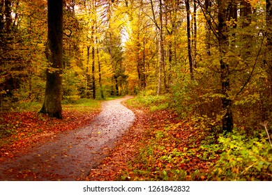 autumn road with red leaves