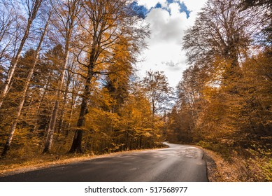 Autumn road with sky and fallen leaves