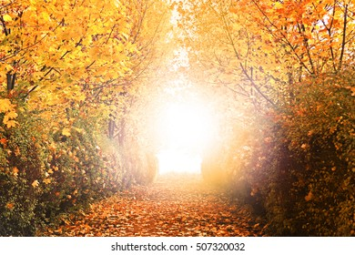 autumn road through the forest with yellow orange light photomanipulation