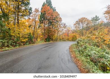 Autumn road in Tohoku, japan