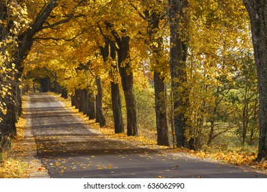 Autumn road trees alley in north Poland/ Autumn road
