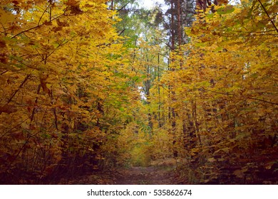 Autumn road in the woods