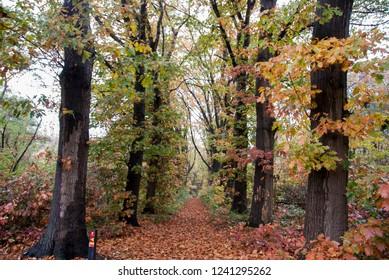 Autumn roads running through the forrest