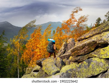 Autumn in the Rocky Mountains. The bright golden color of birches above the boulders covered with yellow lichen. A strong wind bends and breaks trees, tears off leaves.