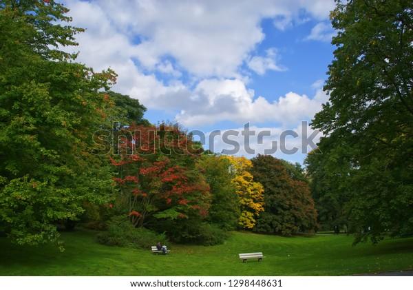 Autumn in Rombergpark Dortmund