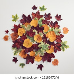 Autumn round composition - Colour autumn leaf on white background. Modern floral background. Autumn maple leaves background. Fall foliage. Modern banner for decoration design. Thanksgiving flatlay