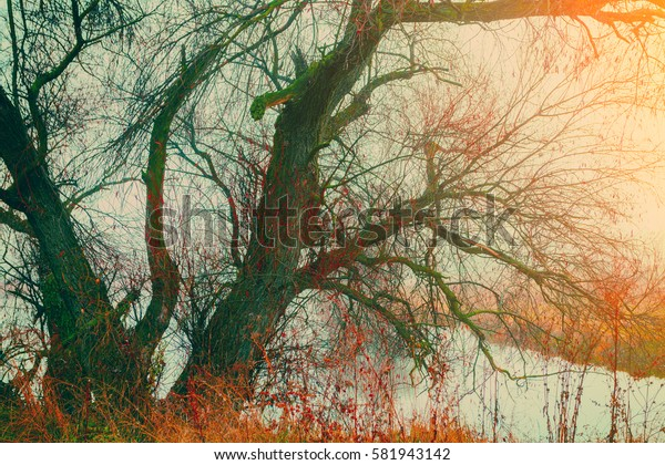 Autumn rural landscape with alone tree and lake. Misty morning in countryside.