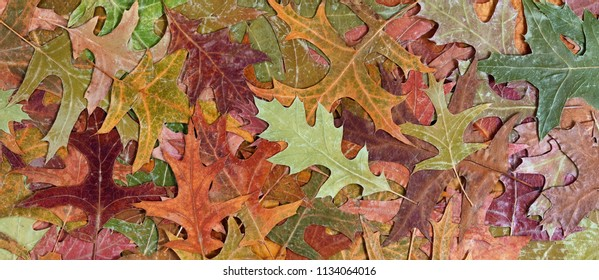 Autumn rustic colorful oak leaves background in filled frame layout