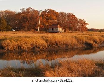 Autumn in salt marshes
