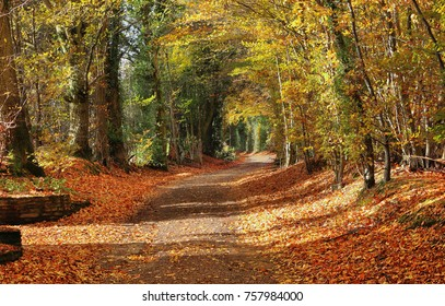 Autumn scene along a Bridle path in the Chiltern Hills in England with fallen leaves on the road