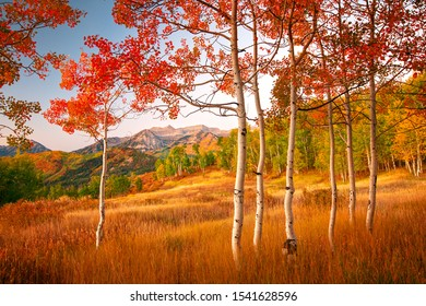 Autumn scene with aspens in the Wasatch Mountains, Utah, USA.