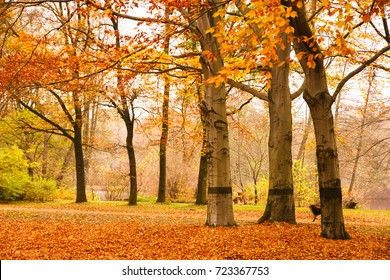 Autumn scene in Berlin with fallen leaves on the ground and trees losing their yellow and red leaves in the public park Tiergarten, Berlin, Germany.