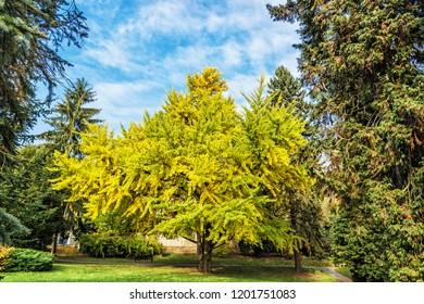 Autumn scene in Bojnice, Slovak republic. Colorful trees. Seasonal natural scene.