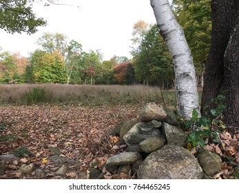 Autumn scene in the country. Fall foliage. White birch tree with stones