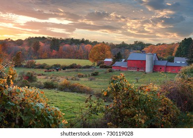 Autumn scene of a dairy farm with cows at pasture and a red barn during sunset